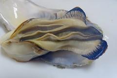 DSC00058 (muzina_shanghai) Tags: 牡蠣 蒸し牡蠣 oyster
