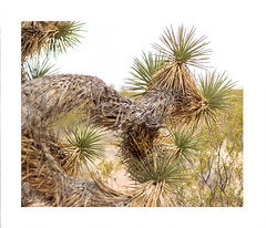 2 (allengrafix) Tags: cactus cacti mountain landscape high key tree grass sky