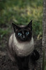 Flopy💙 (_Hian) Tags: cat cats mascotas pets animals animales gatos photography ligthroom nikon 35mm 50mm home session eyes portrait retrato ojos