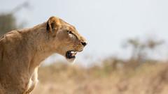 Nairobi-Nationalpark-9922 (ovg2012) Tags: kenia kenya nairobi nairobinationalpark