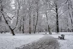 English Garden in Munich, Bavaria (Janos Kertesz) Tags: park munich münchen bavaria bayern bench benchmonday englischergarten englishgarden winter snow cold nature tree frost white season landscape frozen forest snowy