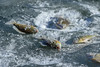 Frozen Fish (BenG94) Tags: milton wisconsin canon 7d markii frozen fish clearlake icefishing sunfish
