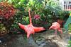 Key West (Florida) Trip 2017 7257Ri 4x6 (edgarandron - Busy!) Tags: florida keys floridakeys keywest butterflyhouse keywestbutterflyandnatureconservatory