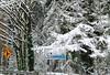 Snow_7950b (johnmoffatt2000) Tags: sammamish