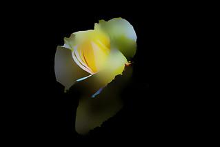IMGP0098 Rose