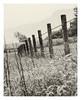 Oban Fields & Fences (Coisroux) Tags: waterdrops fencedfriday fences fencepost fields rain mountains aftertherain d5500 nikond oban scotland landscape monochrome highkey hff raindrops wires