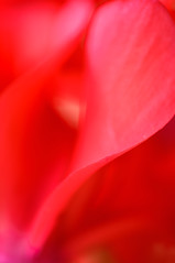 Soft and Delicate (Chris Bruner) Tags: abstract closeup flowers macro plants softfocus vertical