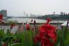 DSC01059.jpg (Kuruman) Tags: malaysia putrajaya flower マレーシア mys