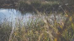 PB_012618_21 (losing.today) Tags: brianyoung oregon pacificnorthwest portland pdx portlandoregon portlandor winter nature outdoors naturepark plantlife plants moodyseason darkseason losingtoday grass grassstudies