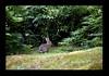 Duke Gardens July 2015 9.46.37 PM (LaPajamas) Tags: nc flora dukegardens gardens
