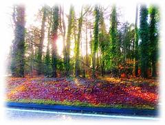 morning Sunlight through the trees.. (John(cardwellpix)) Tags: thursday 25th january 2018 sunlight through trees guildford surrey uk