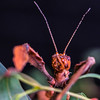 Stick Insect (rrfaris1957) Tags: stick insect littlestories picswithsoul