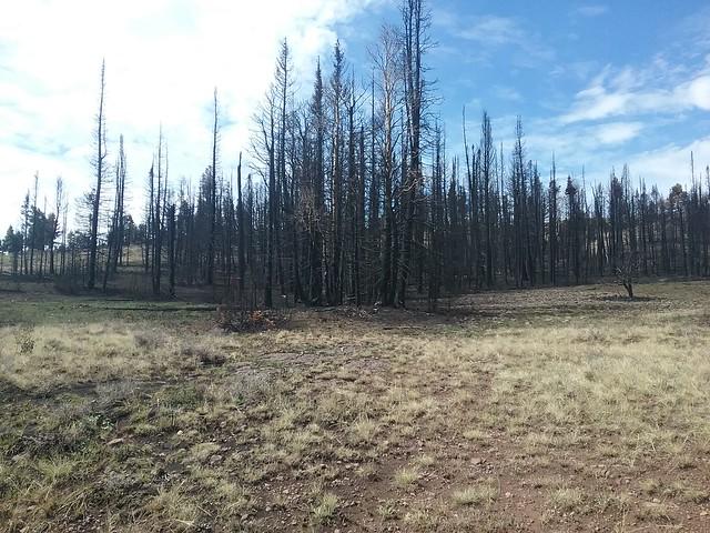 Duck Creek Fire 3