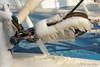 Koud-detail (Don Pedro de Carrion de los Condes !) Tags: donpedro d700 ijs pegels ijspegels winters winter katrol harns harlingen zeehaven vriezen aangevroren bijzonder koud oostenwind apart trawler urk waddenzee visserijhaven uniek compositie ijzig holland hollandsdutch schip maart2018 detail