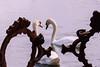 april 2017 lake katherine (timp37) Tags: swan birds lake katherine illinois 2017 april palos kissing fish sculpture
