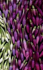 58774.17 Phlox (horticultural art) Tags: horticulturalart phlox buds flowerbuds closeup