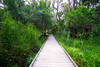 Warriewood Wetlands (dignifiable) Tags: warriewood northernbeaches wetlands nature sydney