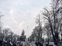 Ravens (vlajko611) Tags: belgrade bird cemetery covering cross crypt dead death forest frozen funeral grave halloween horizontal nature old outdoors overcast raven religion serbia shadow snow spirituality spooky tombstone tranquility tree winter woodland