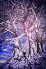 Under the ribbon tree (Matt Bigwood) Tags: aveburystonecircle avebury infrared ir trees tree wiltshire falsecolour nikond100