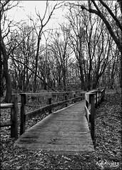Elizabeth Morton Bird Sanctuary... (angelakanner) Tags: canonsx50 longisland elizabeth morton bird sanctuary nature