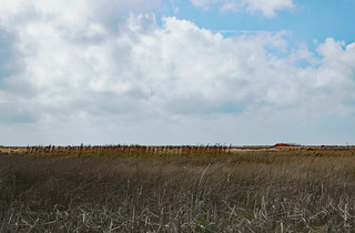 Marsh as far as the eye can see