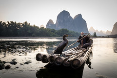 Cormorant Fisherman in Guilin (mlhell) Tags: animals boats china cormorantfishermen cormorants guilin karstmountains landscape lijangriver mountains nature portrait river rural xingping