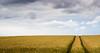 seasonal (Beppe Rijs) Tags: deutschland fjord germany landschaft natur schlei schleswigholstein landscape nature wolken wolkendecke field feld gras horizont horizon clouds farbig colored line linie rural ländlich pastell fertile fruchtbar freshly frisch color farbe acker blue blau yellow gelb vivid lebhaft track spur