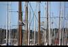 Port de Paimpol (philippe.ducloux) Tags: france côtesdarmor bretagne brittany canon 450d canon450d strictlygeotagged flickraward mywinners bateau boat port harbour harbor drapeau drapeaux flag flags tourisme paimpol sky ciel gwennhadu filtrepolarisant filtre polarisant polarizing filter polarizingfilter mât mâts