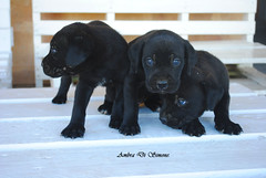 puppies (ambcroft) Tags: puppies cuccioli animals animali dogs cani sicily sicilia italy italia holiday vacanza travel viaggio travelling viaggiare memories ricordi nikon nikond3000