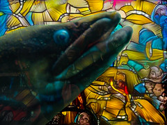 R-Eel-igon (Steve Taylor (Photography)) Tags: religon eel stainedglass church art digital colourful strange odd newzealand nz southisland canterbury christchurch