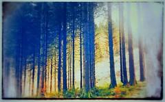 Wild wood Talybont (india_snaps) Tags: wildwoods uk wales nature landscapephotography landscape woodland woods
