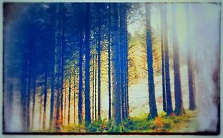 Wild wood Talybont