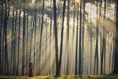 Into the wood (asioni) Tags: wood people pine thailand chiangmai girl light amazing 1 one young camera photography god golden hours morning mountain sun sunrise trees tree forest green red ngc