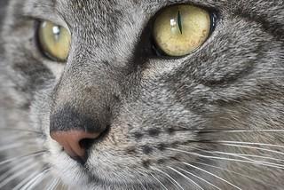 0703 Cat Named Tigran