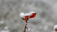Red & White (ricardopardie123) Tags: red snow water white rain ice background winter cold freeze strength view nature ladnscape godscreation