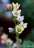 Planting Fields... (angelakanner) Tags: canon70d lensbaby velvet56 longisland plantingfields flowers greenhouse