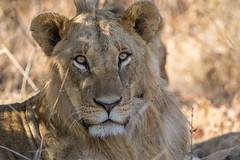 Nairobi-Nationalpark-0347 (ovg2012) Tags: kenia kenya nairobi nairobinationalpark