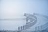 180113063071_1711_b-1 (pixelarized) Tags: doubleexposure water rivier brug vogels birds meeuwen gulls bridge river nijmegen zaligebrug citadelbrug