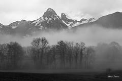 La Dent d'Oche depuis Vinzier (MarKus Fotos) Tags: alpes alps arbre chablais canon clouds cloud gavot vinzier hautesavoie auvergnerhonealpes f4 fog brume brouillard black white winter hiver