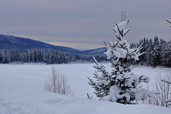 View to frozen Kazyr River, Siberia, Russia (Fedor Odegov) Tags: kazyr fir tree firtree snow frozen winter evening russia siberia tayaty taiga