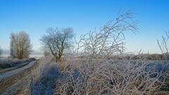 01-Usedom_DxO (walt+) Tags: winter usedom raureif landschaft norddeutschland northerngermany