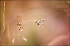 the sisters (Photo Luc@) Tags: farfalla canon colore sfocato bokeh