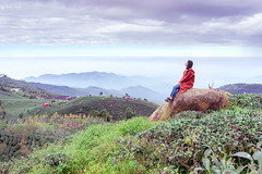 enjoy mountains life (ChenLiang0729) Tags: mountains mountain girl person people nature landscape sky tea teagarden outdoor mountainscape mountainslife mountainside rock leaves enjoy female leisure background 大崙山 大崙山觀光茶園 台灣 南投 女孩 山 茶園