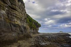 20180207-IMG_0057 (alexeyborissov) Tags: auckland aucklandnz newzealand nz muriwai bay cliff coast gull nature natgeo nordland northland