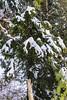 DSC_3898 (PakistanHighlands) Tags: snowfall nathiagali mushkpuri