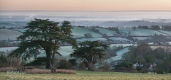 Urban Mists (http://www.richardfoxphotography.com) Tags: exeter exeestuary riverexe mist misty fog foggy wintery frosts farmland fields houses urban city exter panorama sunrise outdoors grass