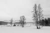 Winter wonderland (hjuengst) Tags: kirchberg austria schwarzsee snow winter winterbeauty mist misty fog foggy tree mountain alps kitzbühel