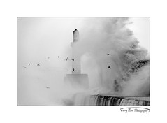 Gulls and Waves_9559 BW (The Terry Eve Archive) Tags: beastfromtheeast storm siberianwind gales gulls waves aberdeenharbour harbourwall bw monochrome blackandwhite