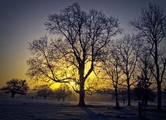 Frosty Sunrise (MrBlueSky*) Tags: sunrise frost trees dawn outdoor nature colour richmondpark richmond park london pentax pentaxart pentaxlife pentaxawards pentaxflickraward pentaxk5 aficionados