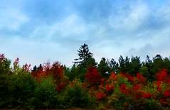 Hornberg red autumn forest (karinanovak) Tags: hornberg red autumn forest germany leaf black road